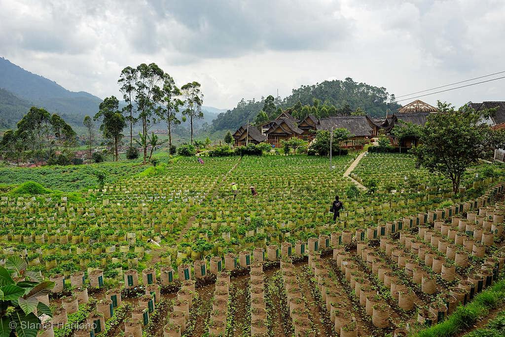 Harmoni Garut Yang Indah Dan Sejahtera Saung Gawir Farm 1
