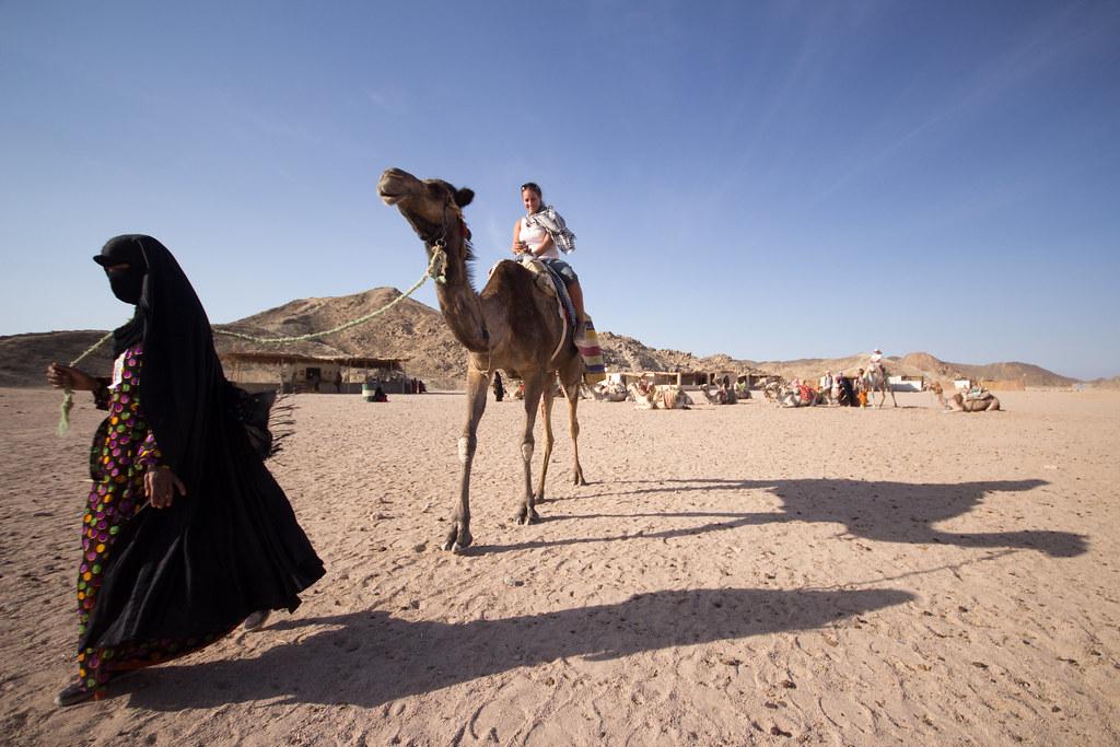 Camel Queen