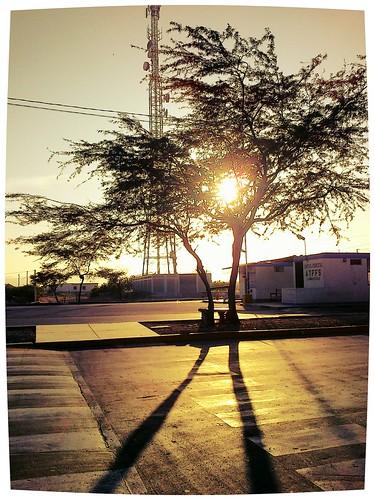 flickrandroidapp:filter=iguana