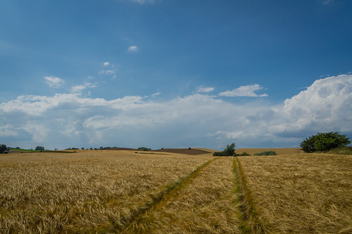 blue sky green field barley yellow clouds day cloudy sweden mark harvest hills ripe trackmarks wheelmarks skånecounty
