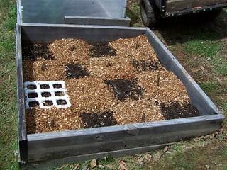 planting, potatoes, gardening, raised beds
