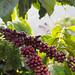 Dalat-20121227_3093