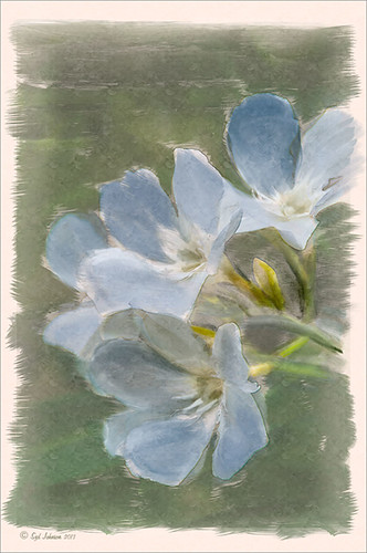 Image of painted white flowers