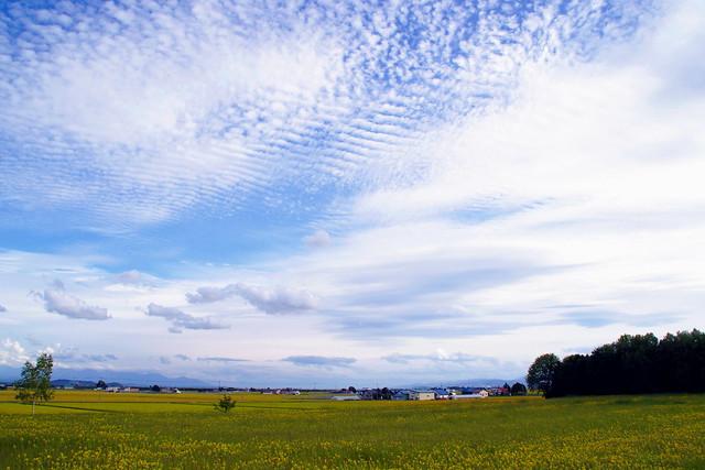 さば雲の秋空