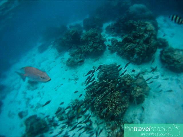 Snorkeling in Koh Nangyuan, Thailand