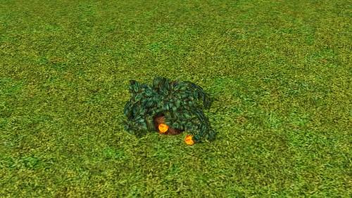 flamefruit