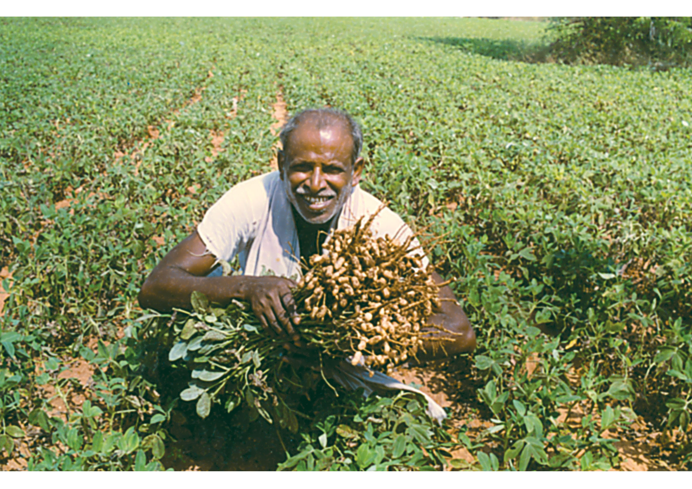 Food Crops in India