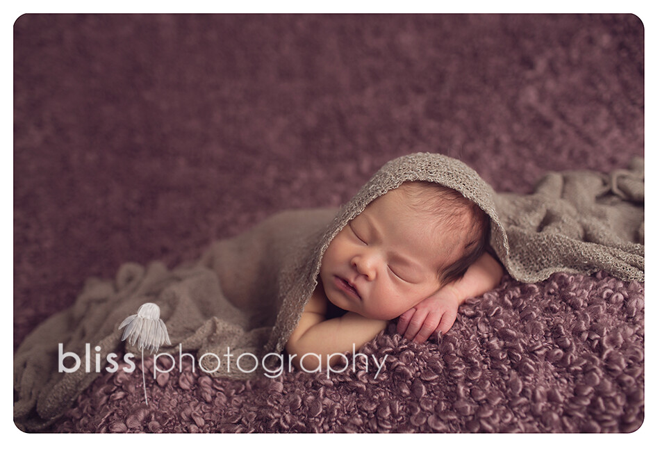 newborn blissphotography-1528