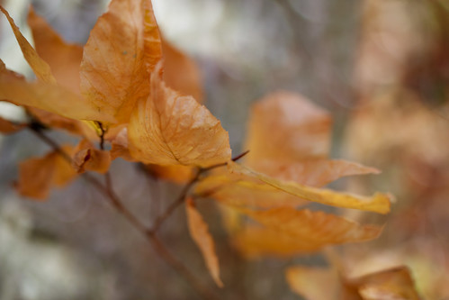 Just Some Leaves by conniee4 aka Connie Etter
