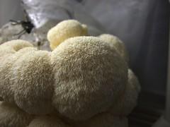 wool(0.0), pet(0.0), thread(0.0), toy(0.0), teddy bear(1.0), textile(1.0), fur(1.0), plush(1.0), stuffed toy(1.0),