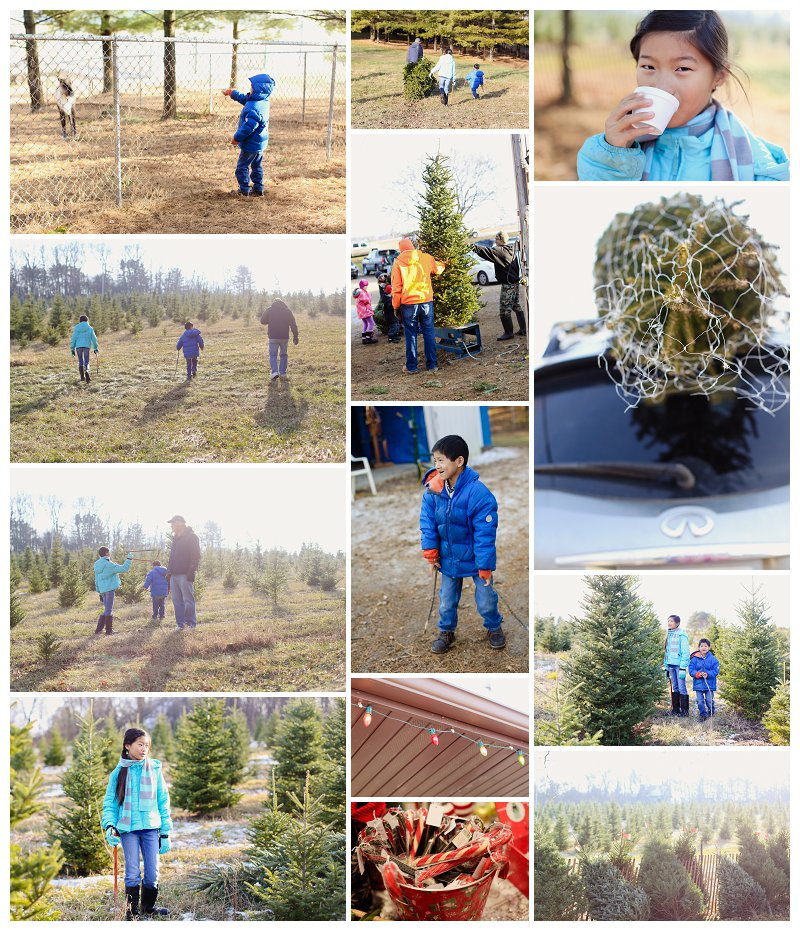 Tree Farm Storyboard Dec 2013