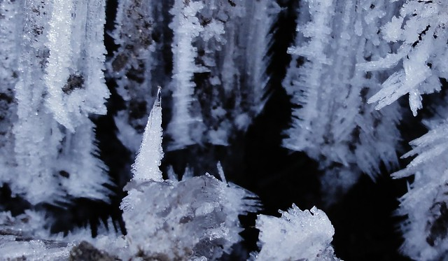 Cropped portion of image showing detail of hoarfrost.