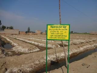 Plantations done at Tapa Khera village