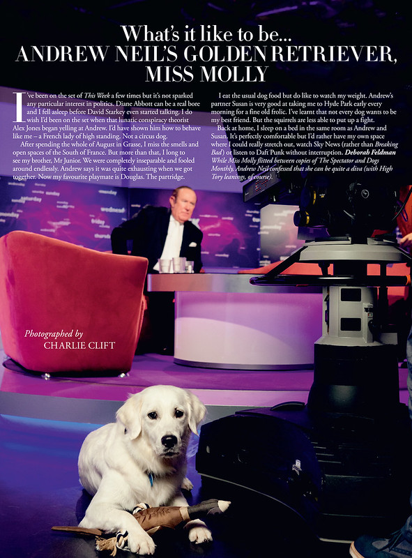 Molly the dog, photographed for Tatler