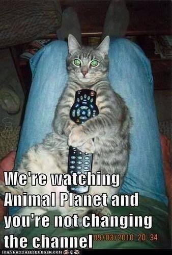 Animal planet cat