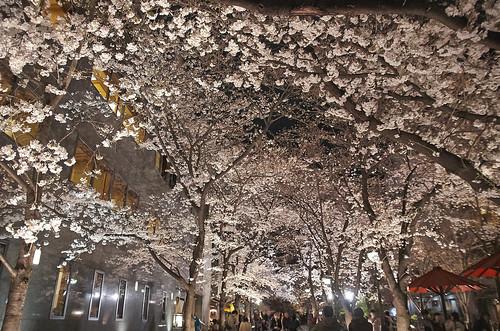 【写真】2014 桜 : 祇園白川/2020-09-13/IMGP5595