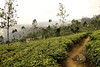 tea plantation Nuwara Eliya by nor_sound