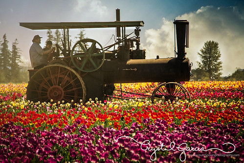 flowers clouds oregon tulips depthoffield tulipfestival woodenshoetulipfarm woodenshoetulipfestival steamtractor woodburnoregon crystalgarcia caseandrussellsteamtractor caseandrussell