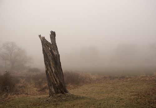 shel silverstein giving tree stump fog