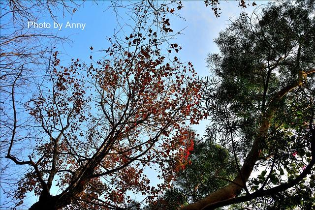 麗池櫻花44