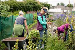 Garden Photography - Women At Allotment