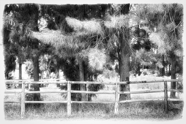 Fence In The Forest