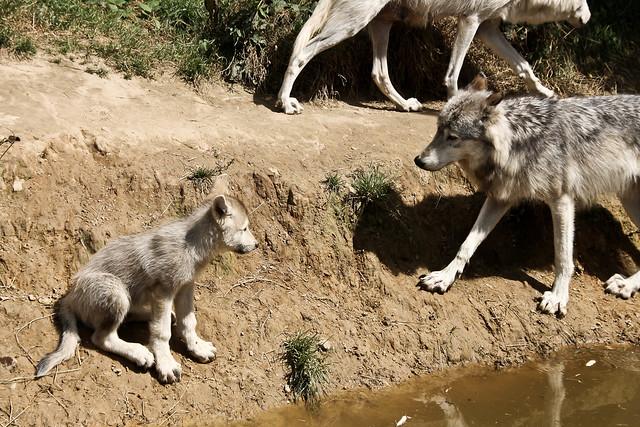 geurae Wolf naega Wolf