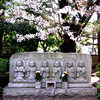 Photo:#1926 Jizō (地蔵) statues and cherry blossoms (サクラ) By Nemo's great uncle