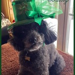 Bailey_St Patricks Day