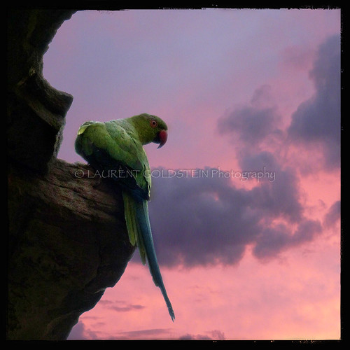 light sunset sky india bird animal mystery clouds square photography asia colours peace delhi dream atmosphere parrot timeless contrejour backlighting quietness hauzkhas भारत indiasong panasonicdmcfz200
