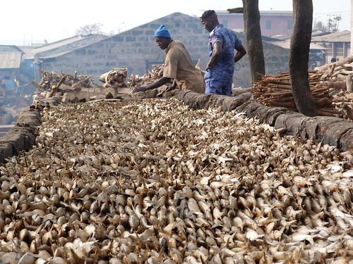 Ahumadera de pescado en Tanji (Gambia)