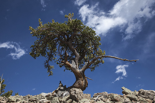 landscape colorado scenic sheepmountain ancientlimberpine