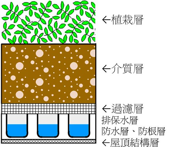 屋頂綠化剖面示意圖