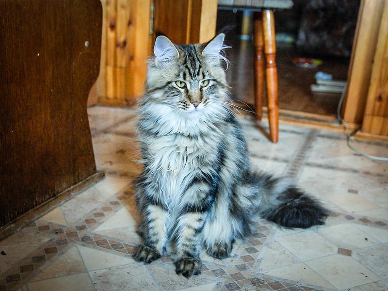 Lynx Shadow Yacare (Якарка)
