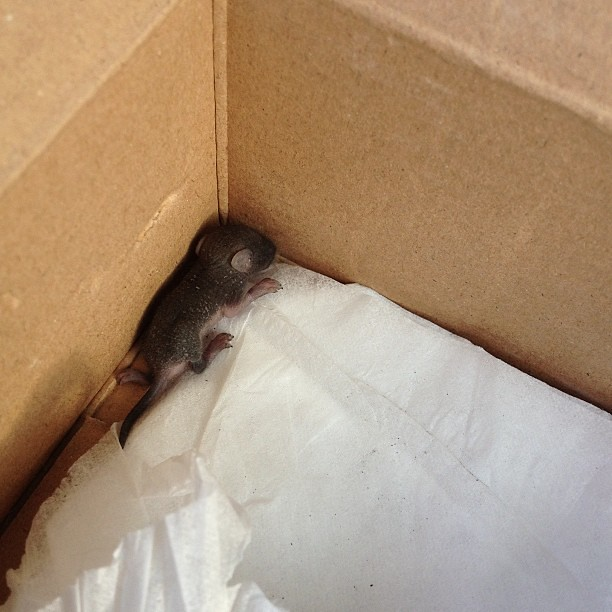 Feeling bad for abandoned baby rat :( taking him out if parking lot, to lake area