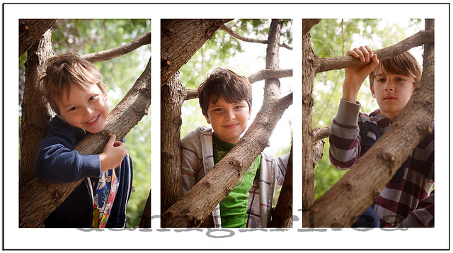 outdoor portraits of brothers in a tree