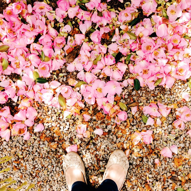 Snapshots // September 29 ~ petal carpet