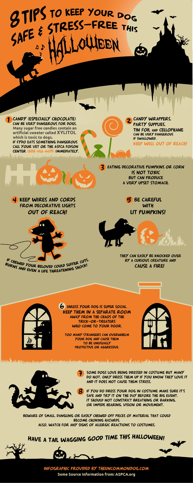 8 Tips to Keep Your Dog Safe & Stress Free this Halloween!