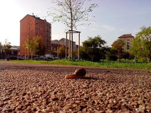 Una lumaca sull'asfalto by Ylbert Durishti