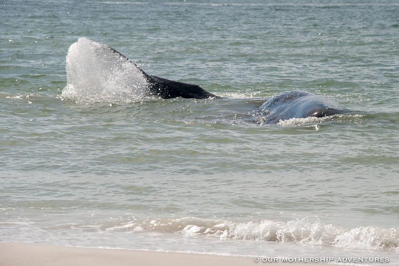 whale11,12
