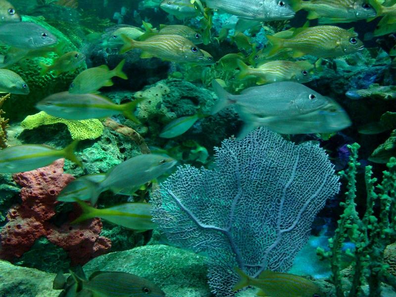 Ripley's Aquarium corals