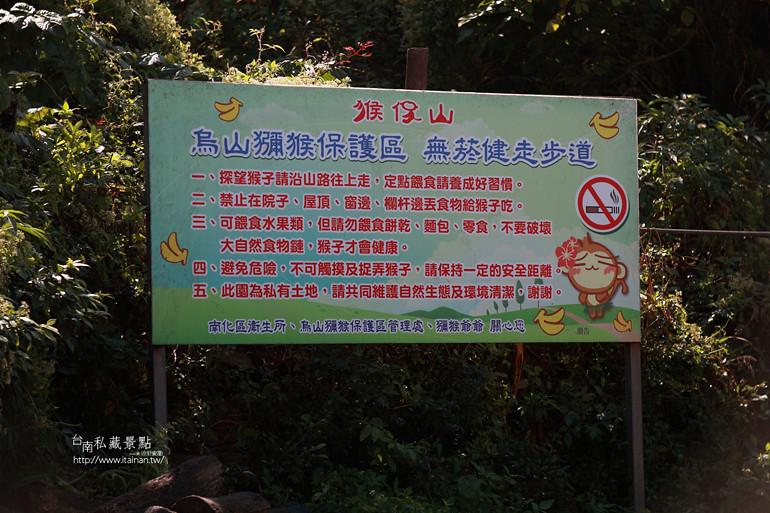 台南私藏景點-南化烏山獼猴 (6)