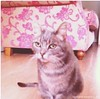 [Updated] Sun, Dec 1st, 2013 Lost Female Cat - Druids Valley, Cherrywood, Dublin by Lost and Found Pets Ireland