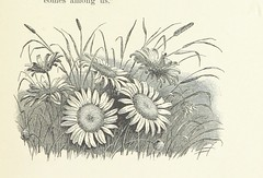 Image taken from page 265 of 'When Life is Young: a collection of verse for boys and girls'