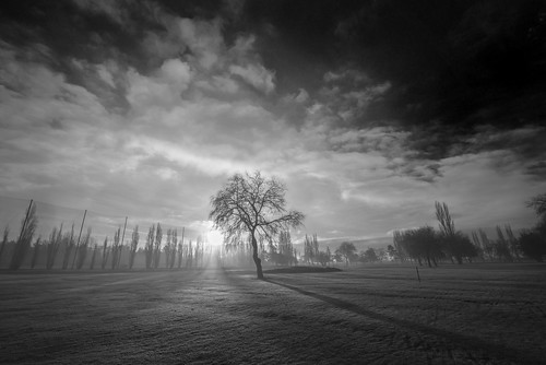 morning winter light shadow sky blackandwhite bw sun white mist black tree art nature monochrome weather clouds sunrise season landscape daylight early blackwhite artwork nikon shadows juan fineart wideangle shades beam dew golfcourse rays nikkor tones 15mm 1424mm rostworowski photographyforrecreationeliteclub d800e photographyforrecreationclassic