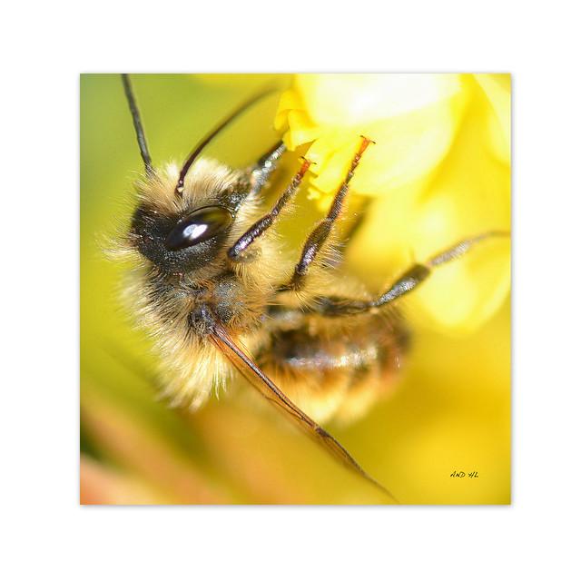 en attendant le miel de printemps