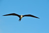 FL 20140204 198 - Key West (Dry Tortugas National Park) by 十二楼 . 寂寞 . 恋人