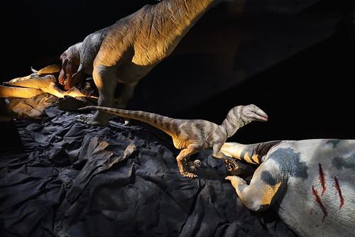Album Exposition Trex Secrets De Famille Dun Dinosaure By Cap Sciences