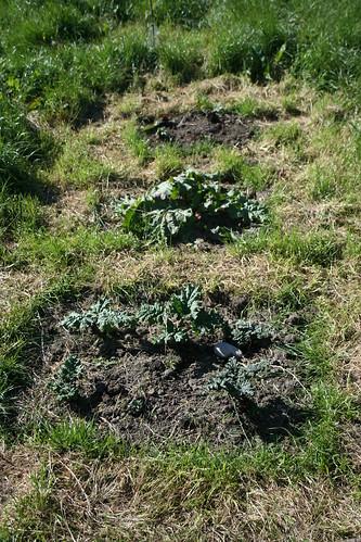 Rhubarb - 01 - 2013-11-02