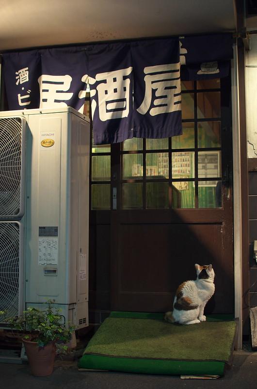 東京春景色 谷中上野お花見散歩 ネコ 2014年4月1日
